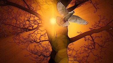 Photo of Γιατί η βλασφημία κατά του Αγίου Πνεύματος δεν συγχωρείται;